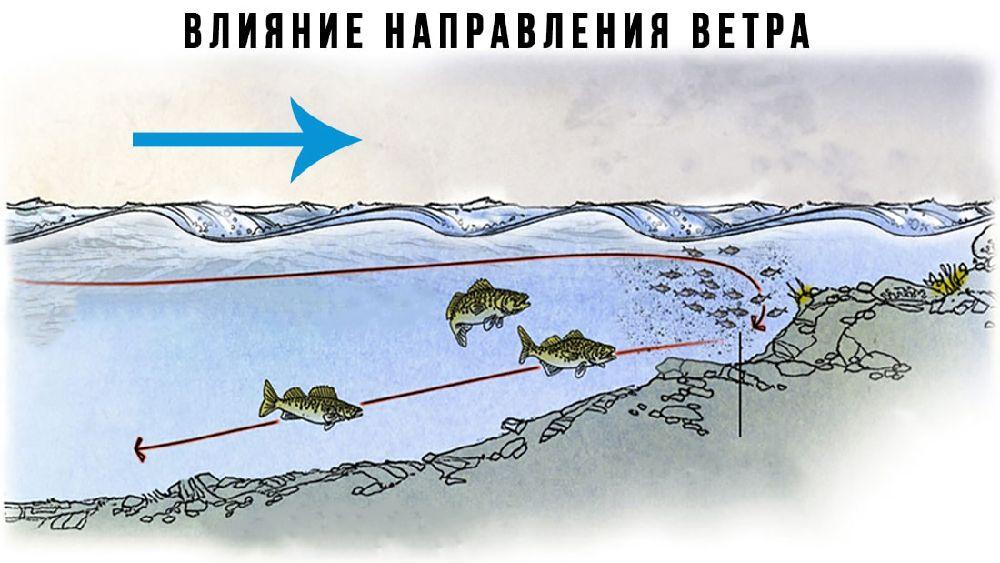 Как ветер влияет на клев рыбы зимой